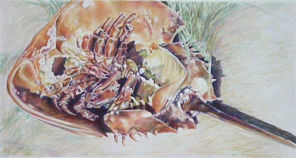 Horseshoe Crab  Art   ebaumeistermcintyre
