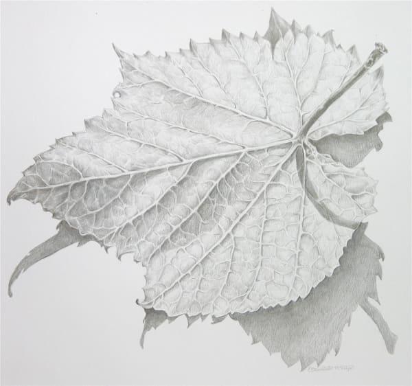 Wild Grape Leaf Art | ebaumeistermcintyre