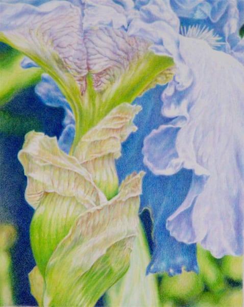 Iris Art | ebaumeistermcintyre