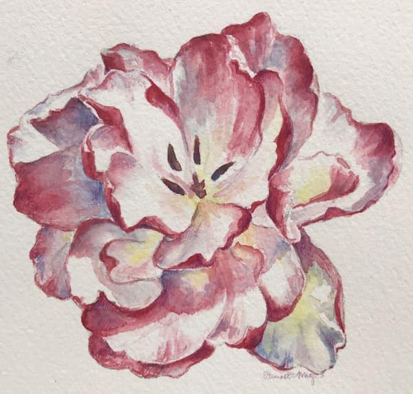 Candycane Tulip Art | ebaumeistermcintyre