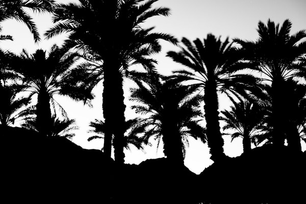 La Quinta Palms I Photography Art | Jim Grossman Photography