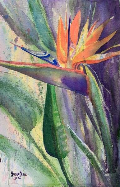 Bird Of Paradise Splash Art | susanclare