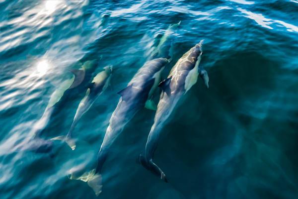 Dolphins & Sharks