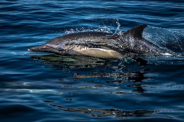 Hydrodynamic Photography Art | Garsha18 Fine Art Photography