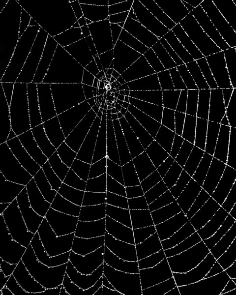 Spider Web Detail 1972 Photography Art | Rick Gardner Photography
