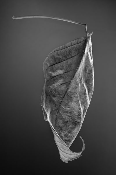 Leaf Making A Left Turn Photography Art | Rick Gardner Photography