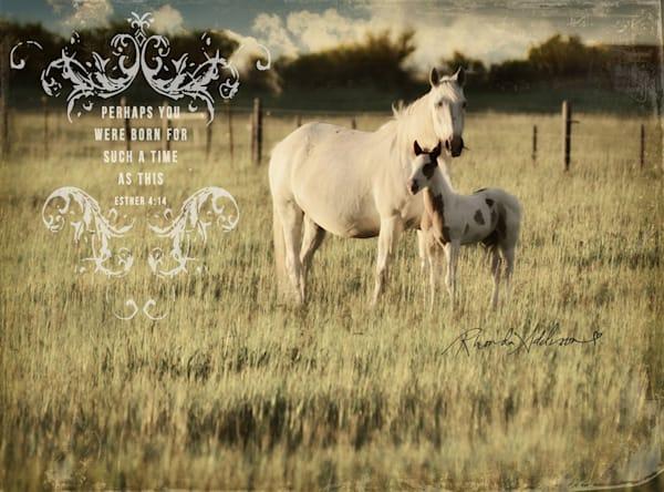EMBELLISHED HORSE & COLT ART