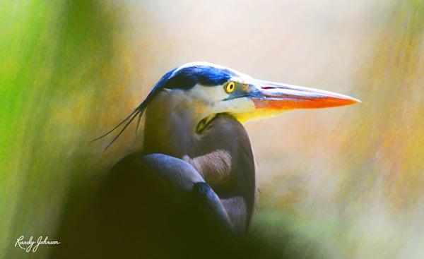 Great Blue Heron Through The Veil Art | Randy Johnson Art and Photography