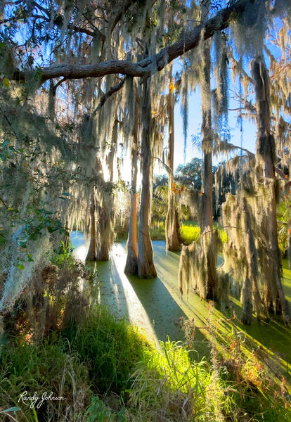 The Swamp Art | Randy Johnson Art and Photography