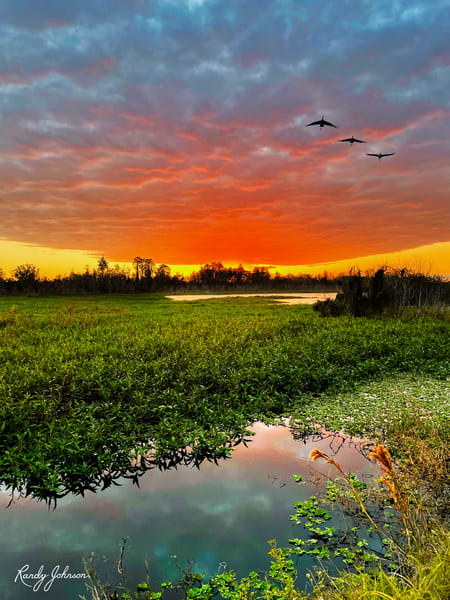 Trio Of Sandhill Cranes Fly The Sunset Art | Randy Johnson Art and Photography