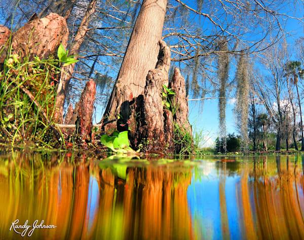 Cypress Swamp Reflections Art | Randy Johnson Art and Photography