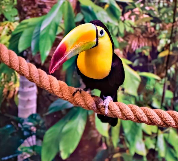 Toucan Photography Art | frednewmanphotography