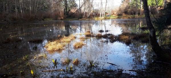 Seagirt Ponds Spring Vista Art   kathleenschmalzartist