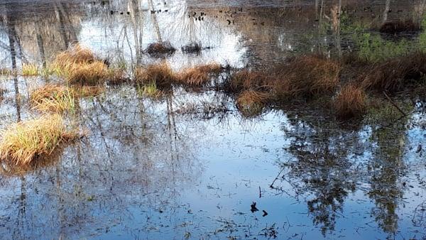 Seagirt Ponds Spring Lines And Colours Art   kathleenschmalzartist