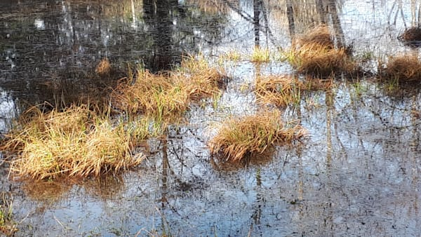 Seagirt Ponds Spring Yelow Grass Art   kathleenschmalzartist