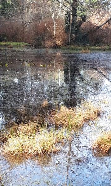Seagirt Ponds Spring Soft Light Art   kathleenschmalzartist