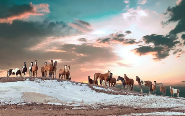 Attentive Colorful Wild Horses Photography Art | Great Wildlife Photos, LLC