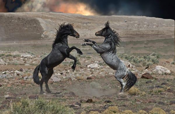 Black And Grey Fury  Photography Art | Great Wildlife Photos, LLC