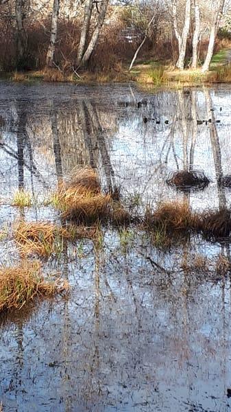 Seagirt Ponds Spring Reflected Alders Art   kathleenschmalzartist