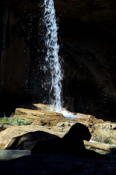 Hiding In Plain Sight Photography Art | Great Wildlife Photos, LLC