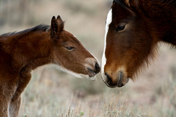 Newborns First Touch Photography Art | Great Wildlife Photos, LLC