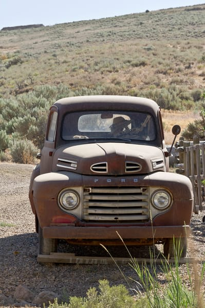 Stuck In Midas Traffic  Photography Art | Great Wildlife Photos, LLC