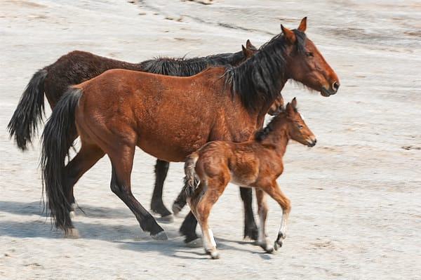 Herd With Newborn Photography Art | Great Wildlife Photos, LLC