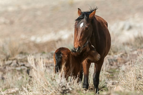 Mare And Foal  Photography Art | Great Wildlife Photos, LLC