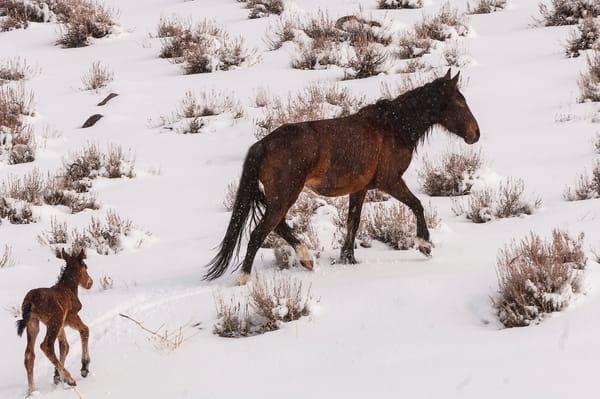 Newborn Struggling To Catch Up  Photography Art | Great Wildlife Photos, LLC