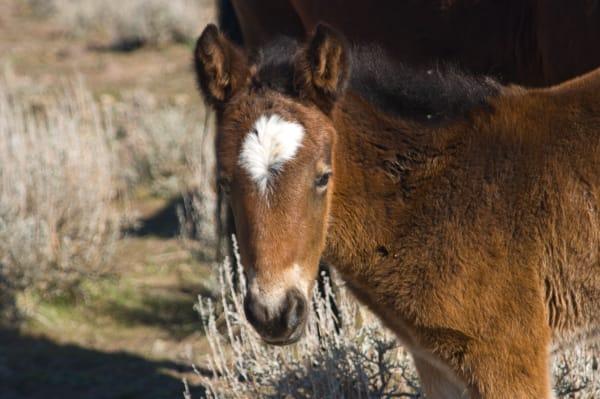 Wild Horse Colt  Photography Art | Great Wildlife Photos, LLC