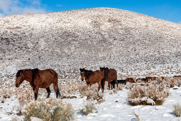 Wild Horse Family And Habitat  Photography Art | Great Wildlife Photos, LLC