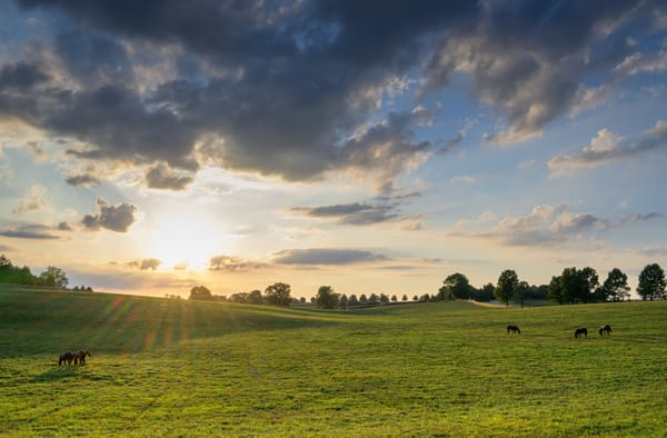Horses at Sunset 8796