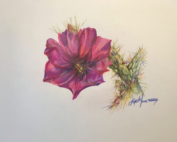 Lindy Cook Severns Art |  Cholla Bloom, print