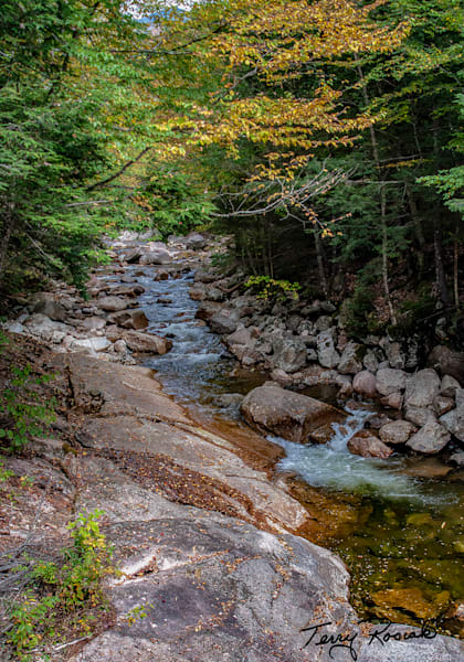 A New England Stream by Terry Rosiak