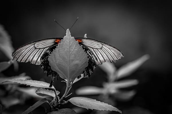 Dream Photography Art   Garsha18 Fine Art Photography