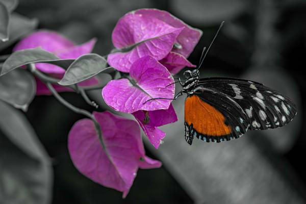 A Flower That Flies Photography Art   Garsha18 Fine Art Photography