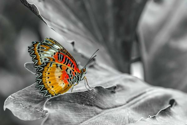 Happiness Found Photography Art   Garsha18 Fine Art Photography