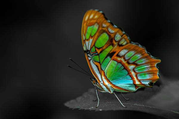Moment Photography Art   Garsha18 Fine Art Photography