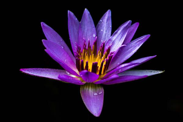 Perfectly Purple Photography Art   Garsha18 Fine Art Photography