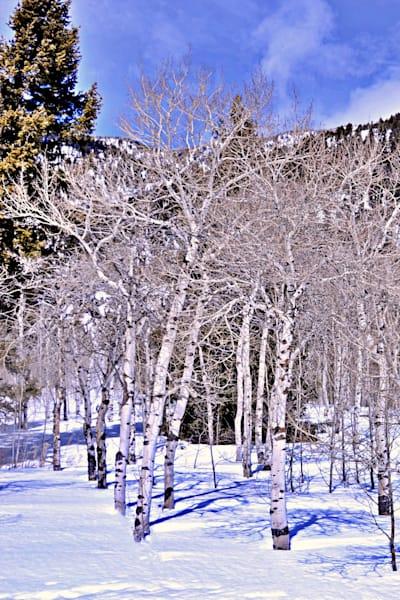 White Willows