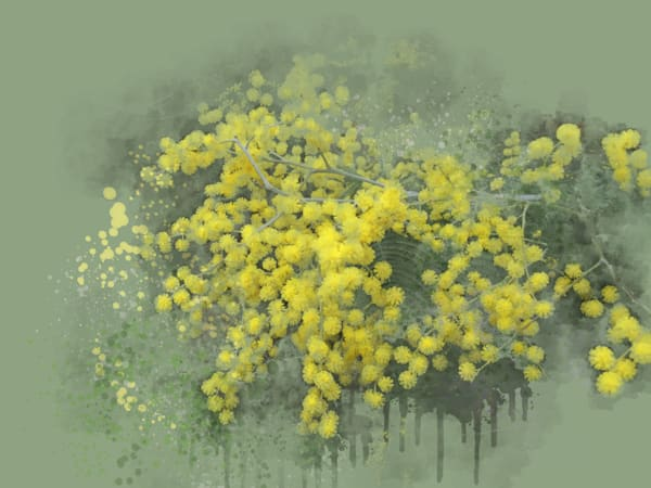 Acacia Tree In Bloom Art | Art from the Soul