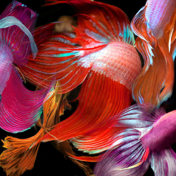 Betta Collage 41 Photography Art   MPF Gallery