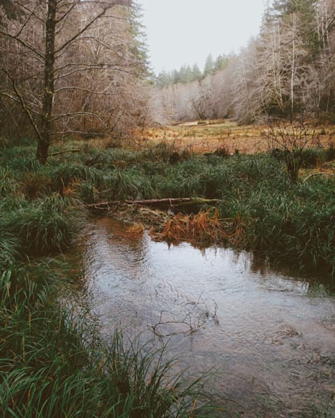 Soapstone Creek 2015