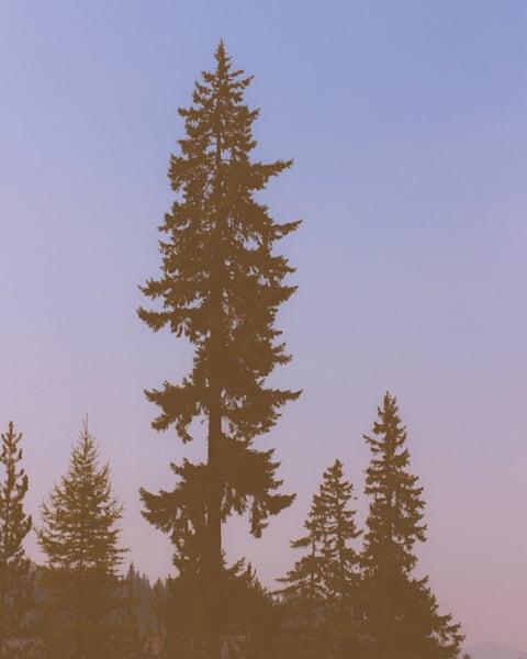 Tree Shadows 2015