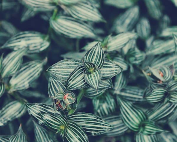 Patterned Flora 2015