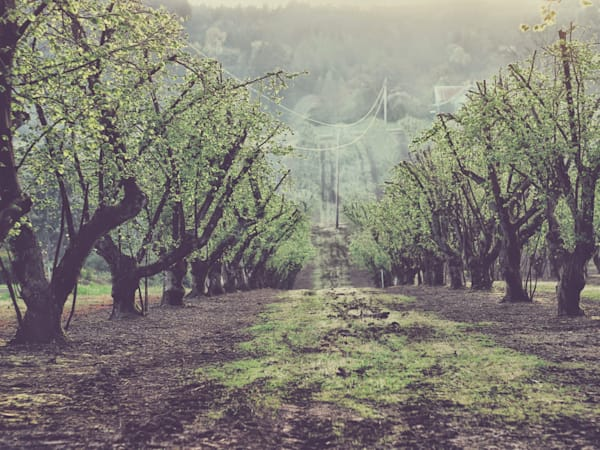 Orchards 2015