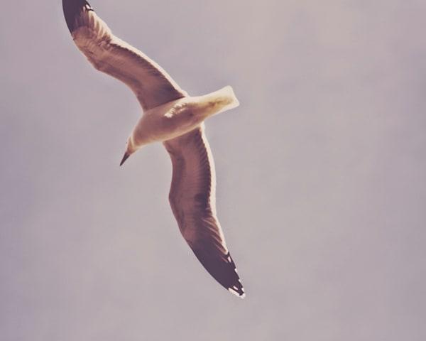 Seagull 2015
