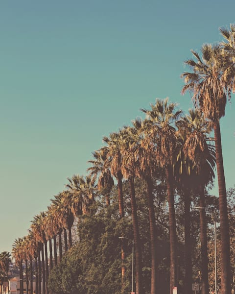 Hollywood Palms 2015