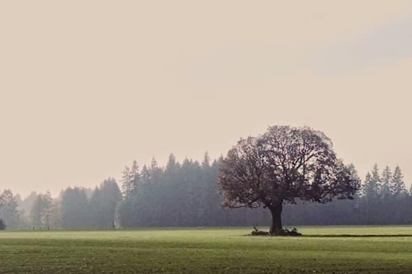 White Oak 2014