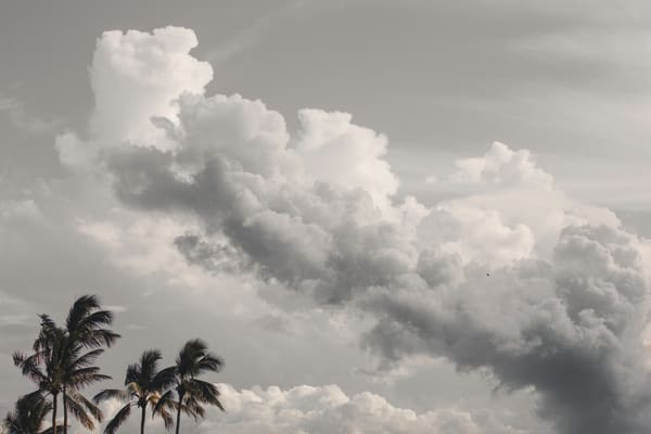 Lone Bird Ocean View Photography Art | Nathan Larson Photography